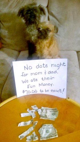 dog-shame-ate-the-money