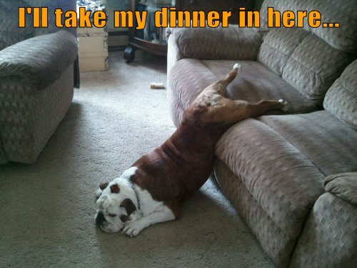lazy bulldog on couch