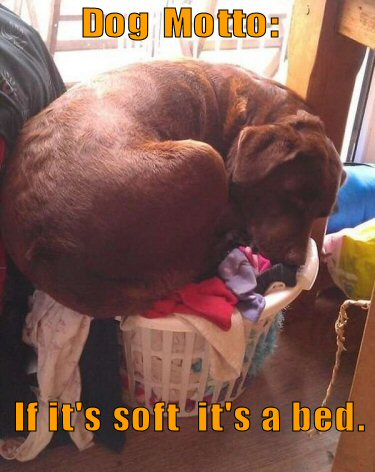 Dog sleeping in laundry basket