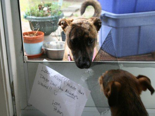 dog poked hole in screen door