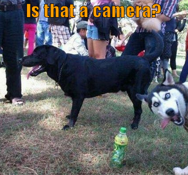 dog photobombing