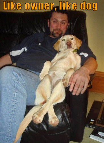 Dog relaxing on recliner with owner