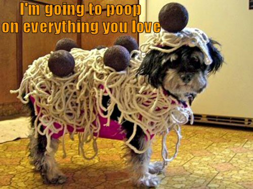 Dog dressed as spaghetti and meatballs
