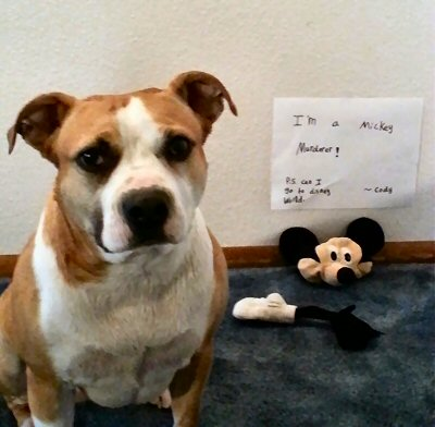 Dog killed a stuffed Mickey Mouse stuffed animal