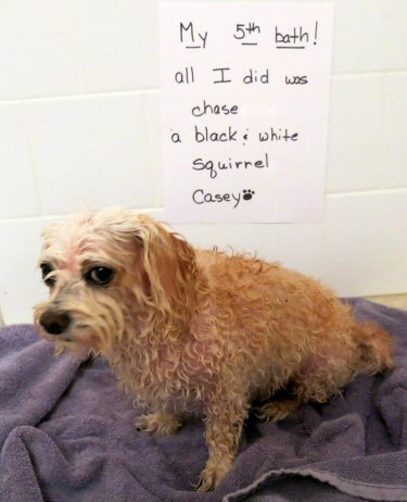 dog sprayed by skunk
