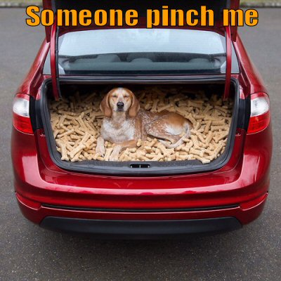 Dog in trunk of car with lots to treats