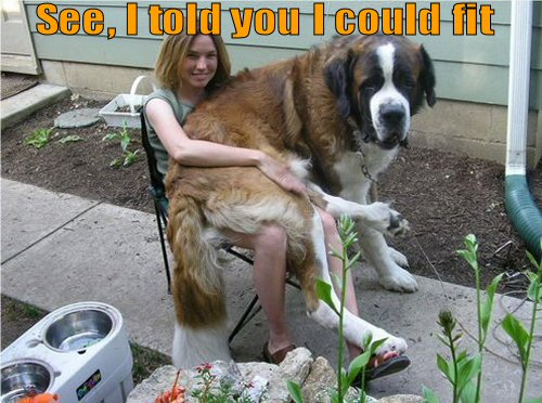 Big dog wamts to be a lap dog