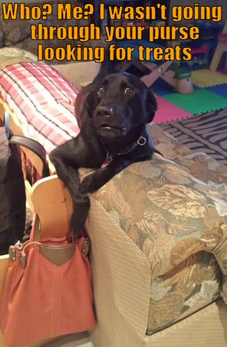 Dog caught going through purse