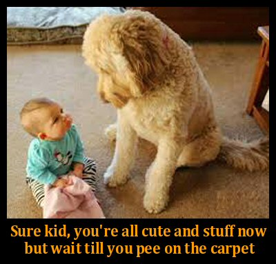 dog and baby on floor