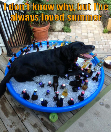 Dog lying in a pool of ice and beer