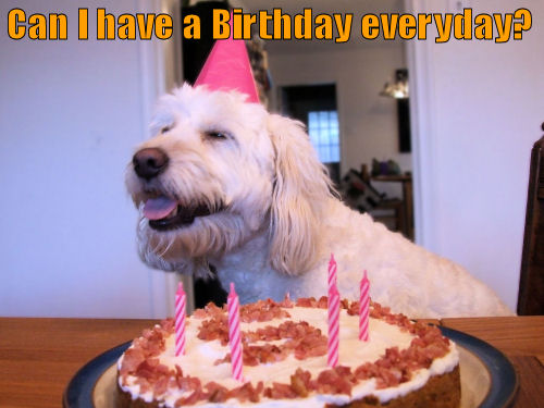 Dog wishing everyday was a Birthday