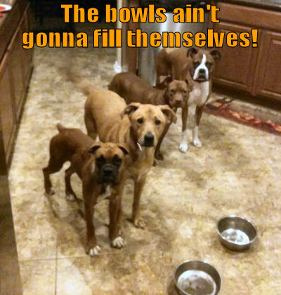 Dogs wanting human to fill their bowls
