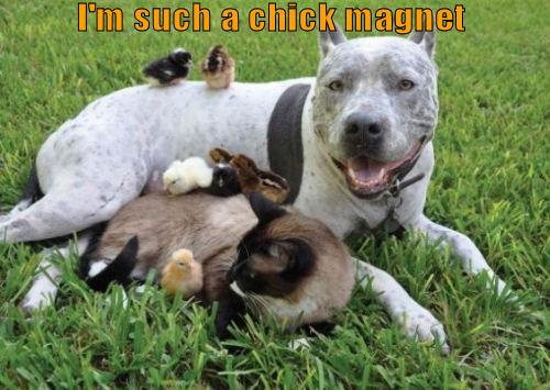 funny-dog-chick-magnet