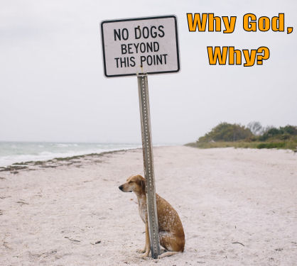 Funny-dog-why-god