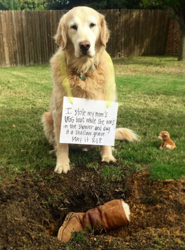 Dog ate mom's ugg boots