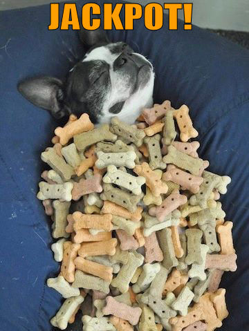 Dog surrounded with dog biscuits