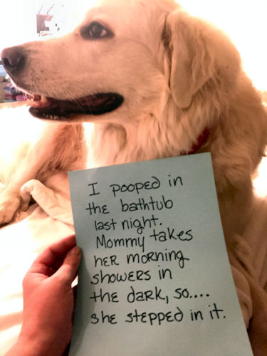 dog-shame-bathtub-pooper