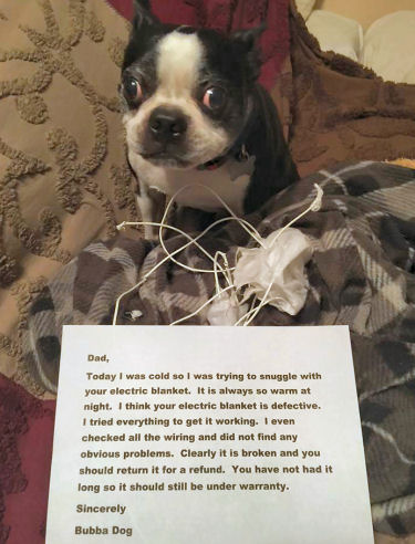 dog-shaming-electric-blanket-broken
