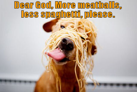 Dog with spaghetti all over head
