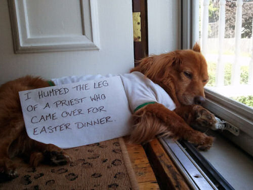 dog-shaming-i-humped-the-leg-of-a-priest
