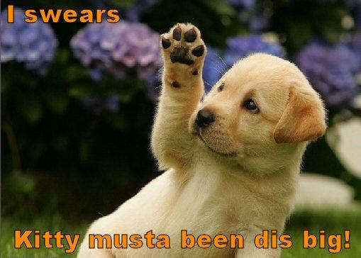puppy-describing-kitty