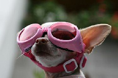 https://www.funnyfidos.com/wp-content/uploads/2009/06/dog-funny-goggles.jpg